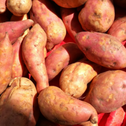Orange fleshed sweet potato: Reap the benefits